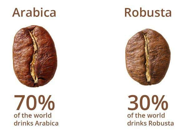 Arabica vs Robusta Coffee: What's the Difference?